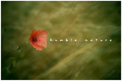 Humble Nature (szabi.zsoldos) Tags: wood sunset wallpaper portrait sun blur hot flower macro brick girl beautiful fashion wall closeup canon bench photography grey photo amazing nice model rocks king looking bokeh 14 great picture corridor wear romania cloth archer 50 neighbour szabolcs mures targu 40d zsoldos