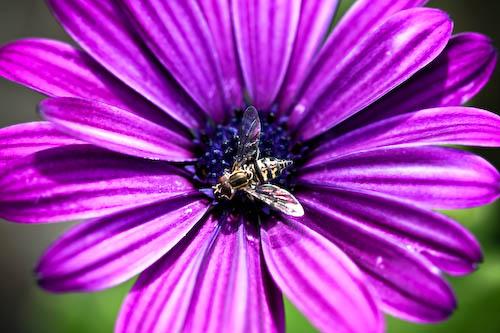 daisy + fly1