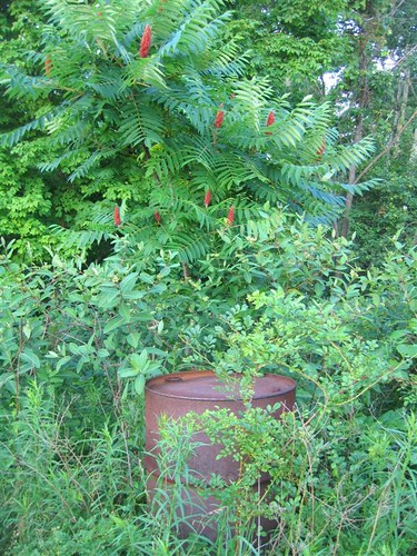 Discarded oil drum in the woods