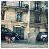 Parisian Dog (Aaltra) Tags: dog pet paris voigtlander parisian 75010 brillant ttv throughtheviewfinder througtheviewfinder