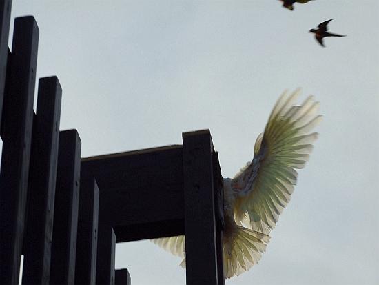 nice wing