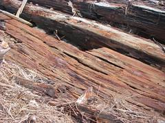 IMGP0142 (paulsyak) Tags: kayak lewes delawarebay beachplumislandshipwreck