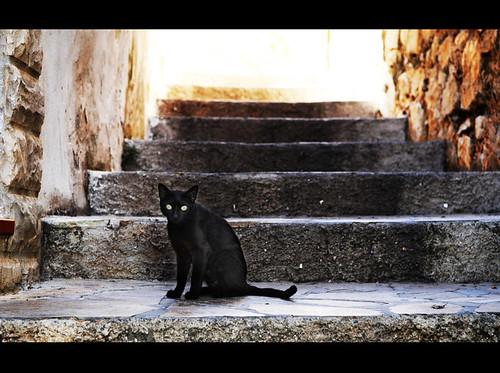 La escalera del gato negro