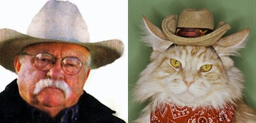 Wilford Brimley Looks Like a Cat 1