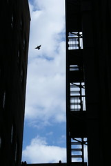 Fly Away (Canicuss) Tags: light shadow sky bird silhouette clouds stairs buildings fly flying alley downtown artistic action pigeon mo kansascity missouri fireescape kc conceptual cloudscape flyaway canicuss
