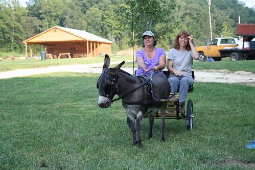 Miniature Donkey Cart