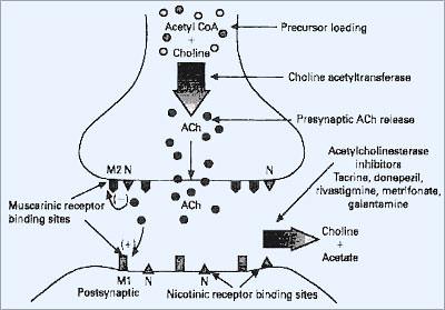 As bolinhas são o Agonista, os quadradinhos são os receptores.