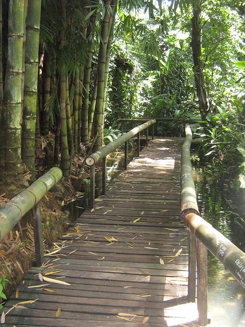 Jardin bot nico la laguna el salvador for Caracteristicas de un jardin botanico