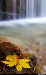 Alta Val di Chiampo - Campodalbero - Dettagli (Enrico Grotto) Tags: longexposure autumn water landscape waterfall leaf foglia 1855mm acqua autunno paesaggio cascata