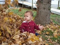 El in the leaves.