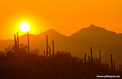 Sunset Over Saguaro, Tucson (Jeff Wignall) Tags: sunset cactus sky sun inspiration mountains southwest landscape nikon saguaro americanwest desertlandscape wignall saguarocactus westernlandscape sunsetphotos anawesomeshot giantsaguaro photocontesttnc10