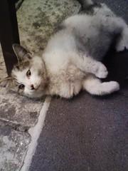 野良猫がいた