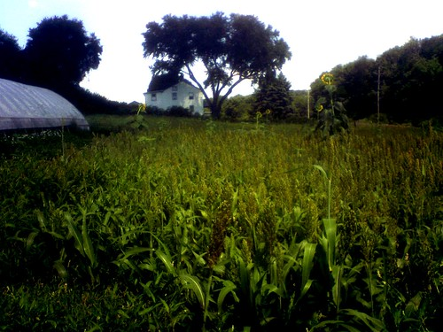 Photograph of Eerie House in Corn by Daina=