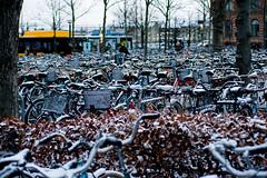 First Snow in Lund (Rutger Blom) Tags: city snow lund public skne europa europe sweden sneeuw skandinavien bikes bicycles sverige scandinavia sn fietsen stad scania zweden cyklar skane lundskanelan