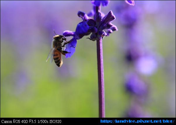 9711-新社花海:Date with Bee_036.jpg