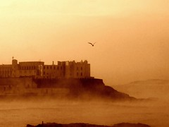 Portstewart - Leaving the convent (horslips5) Tags: morning ireland sea mist seascape bird castle beautiful fog coast rocks seagull frosty nun cliffs coastal londonderry northernireland convent atmospheric derry portstewart seabird ulster nireland top20ireland aplusphoto goldstaraward