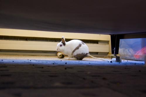 Rabbit anus hemorrhoid — img 8