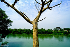 View at River ................ (Rambonp love's all t) Tags: blue trees india reflection green water river skies punjab ropar