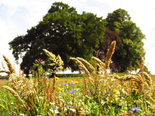 Wild Flowers on Hampstead Heath