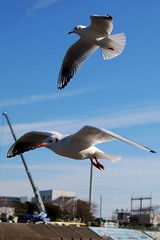(emvillasenor) Tags: seagulls yokohama tamron  f28 2875