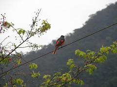 三月到烏來賞落櫻-看到一隻漂亮的小鳥