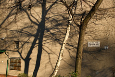 jvidk tr (sonofsteppe) Tags: street trees light shadow urban sunlight detail art wall dark square daylight mural hungary afternoon finding outdoor availablelight empty budapest gray scene explore shade trunk birch visual exploration sunbeam bough asymmetric streetplate streetnumber postboxes newcountry wallscape sonofsteppe pusztafia zugl utcatbla streetplatesofbudapest jvidktr urbanlifeoftrees