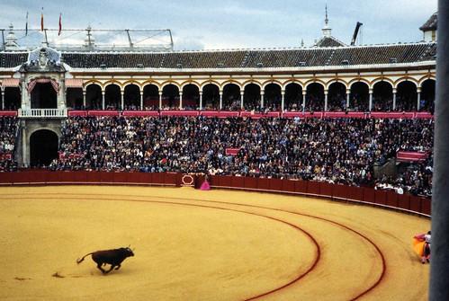 Bull.Seville1
