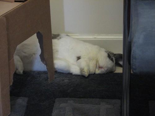 dead bunny betsy
