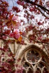 Notre Dame (Jordiet.) Tags: paris flower fleur flor notredame parís îledelacité rosetón ltytr2 ltytr1