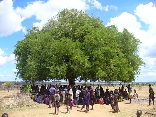 one of the many learning trees we visited