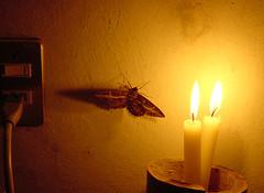 moth-flame