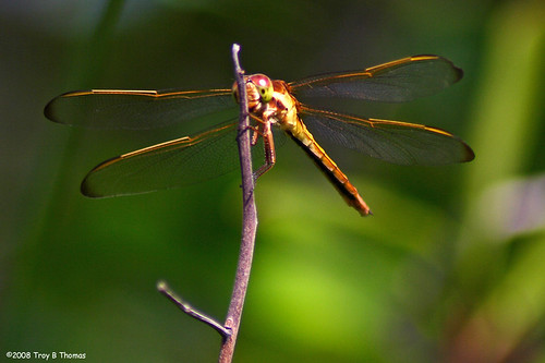 Dragonfly2_052508