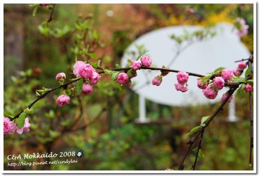 Hokkaido_0410