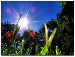 shine on you crazy diamond (-Chad Johnson) Tags: trees sun grass minnesota backyard glare shine pinkfloyd rochester flare shootingup layingontheground