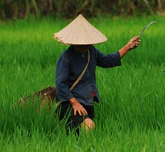 CSC_0436 (DarioM_72) Tags: travel people asia southeastasia vietnam aplusphoto colourartaward dariomilano
