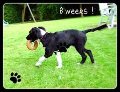 18 weken oud !