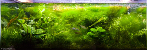 Algae Filled 40G