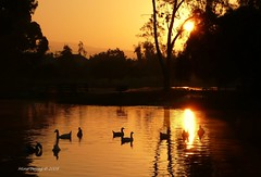 Rising Sun and the Tri-City Park (Mine Beyaz) Tags: california park orange sunrise placentia reflexions fullerton brea supershot mywinners anawesomeshot aplusphoto infinestyle theunforgettablepictures gundogumu grouptripod guasdivinas