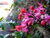 flowers on the base of a fruit tree (parttimefarm) Tags: flowers trees brasil fruit echapora