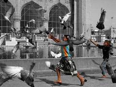 freedom.... (Adarsh Padegal) Tags: india hyderabad andhra oldcity adarsh pca hpc telugu andhrapradesh explored hyderabadphotographyclub adarshpadegal