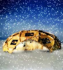Hybernating.......in style! (Gravityx9) Tags: winter snow photoshop season polarbear chop picturesque amer blogthis 060106 psfo diamondheart diamondstars colourartaward coloursplosion totalphotoshop checkoutmynewpics flickrballoonaward