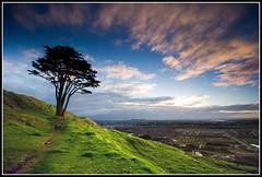 Just Another Tree (Chris Gin) Tags: newzealand tree clouds auckland nz mtwellington mountwellington ndfilter gndfilter neutraldensity graduatedfilter platinumphoto