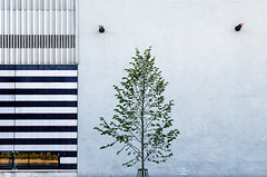 Urban Tree (pni) Tags: shadow urban tree nature wall suomi finland europe surface heidelberg helsingfors eurooppa skrubu pni manandenvironment pekkanikrus