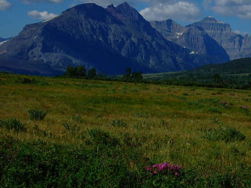 montana: BIG MOUNTAINS, tiny flowers
