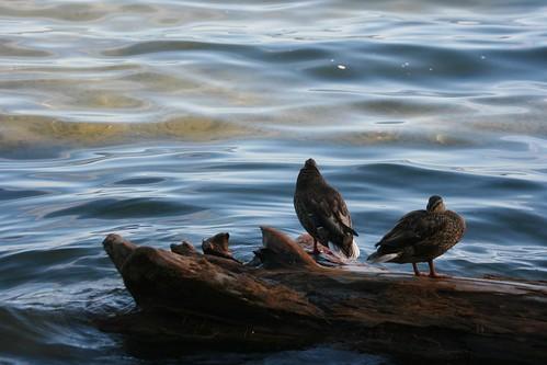 Seward Park - Telephoto