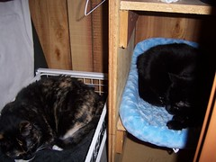 Hex and Jinx (stephanievand) Tags: cats jinx hex