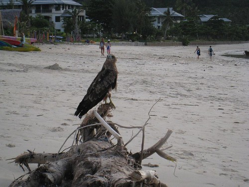 A bird stops by for a few photos