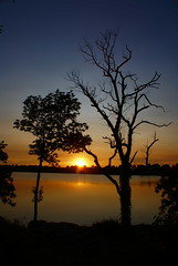 Marriage at Sundown (Canicuss) Tags: blue trees sunset sky orange lake black water beautiful silhouette yellow night landscape branches horizon together shore marriageatsundown canicuss