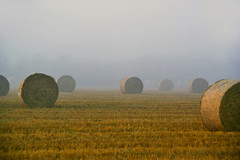 Misty Harvest (algo) Tags: england english field misty fog season photography topf50 bravo farm harvest august topv222 cylinder romantic topv777 hay bales 1001nights bale algo topf100 mellow stubble keats blueribbonwinner fruitfulness makinghay seasonofmistsandmellowfruitfulness 80831 200850plusfaves brillianteyejewel dazzlingshots damniwishidtakenthat lesamisdupetitprince thanksforallthetagsxjyxjy