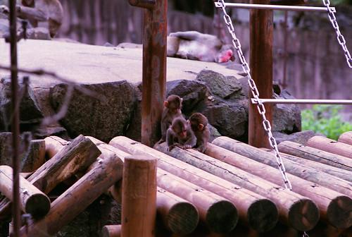 0808八木山動物園の小猿
